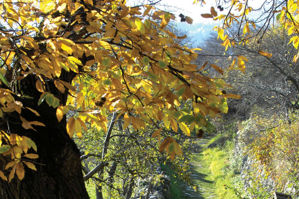 Fall vacation in the Isarco Valley – Fireworks of colours in South Tyrol